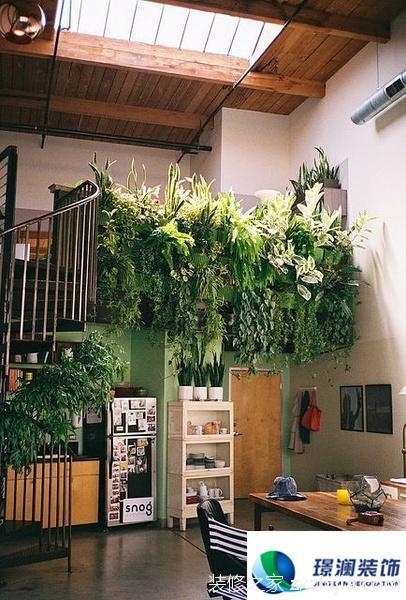 这样养绿植  才够好玩