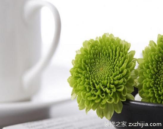 办公桌上放什么植物好