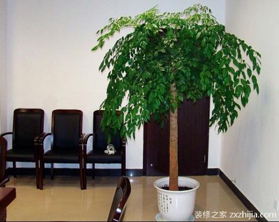 修剪:养幸福树的目的是