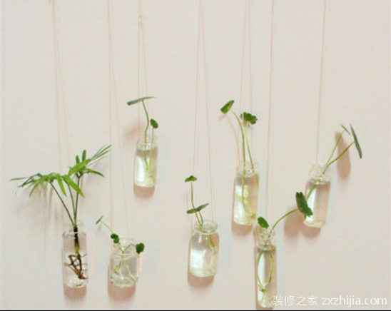 室内水生植物怎么养