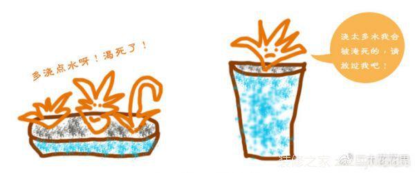 多肉植物如何浇水