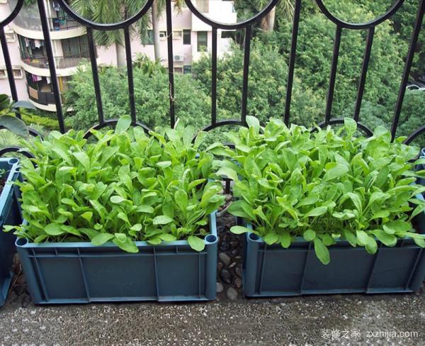 阳台上怎么种蔬菜