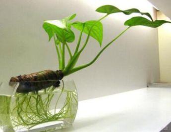 什么植物能让空气清新?什么植物适合放家里?
