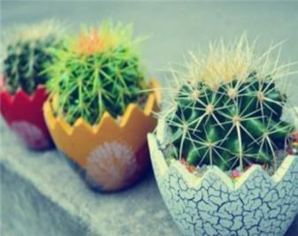 盆栽仙人球怎么养?盆栽仙人球的养殖方法
