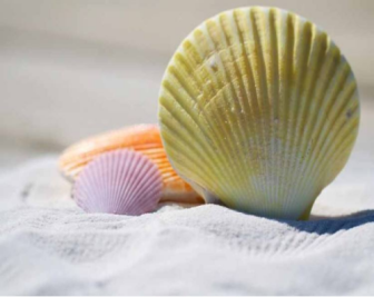 什么是贝壳粉涂料?贝壳粉涂料好用吗?