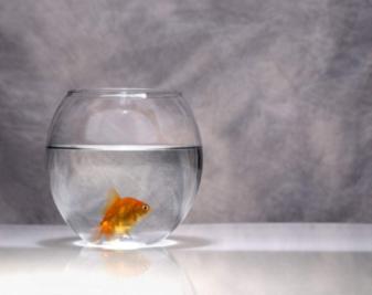 玻璃鱼缸材质哪个好?玻璃鱼缸制作方法