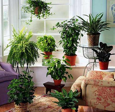 家居风水植物讲究有哪些?家居风水植物注意事项