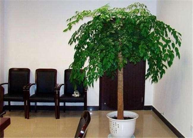 适合客厅摆放的植物有哪些? 客厅摆放植物技巧