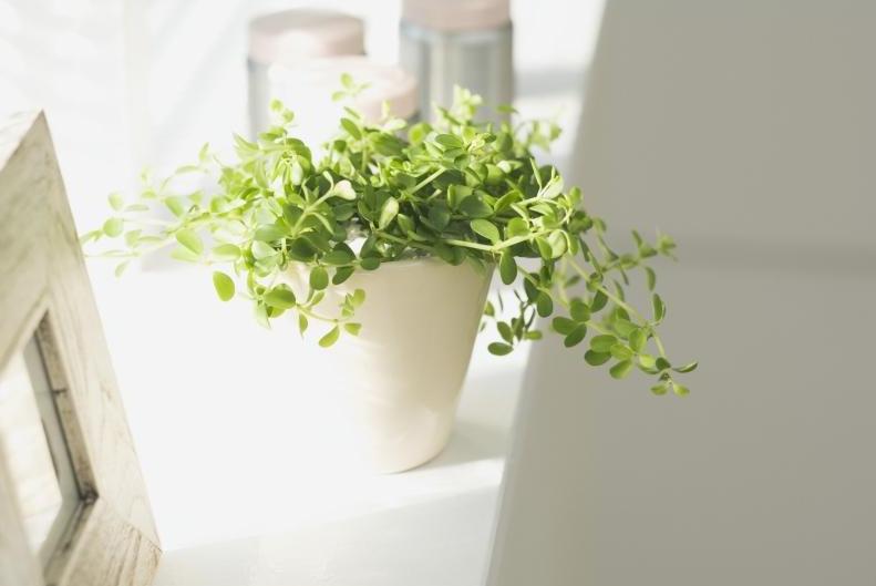 客厅里放什么植物好?客厅植物风水禁忌