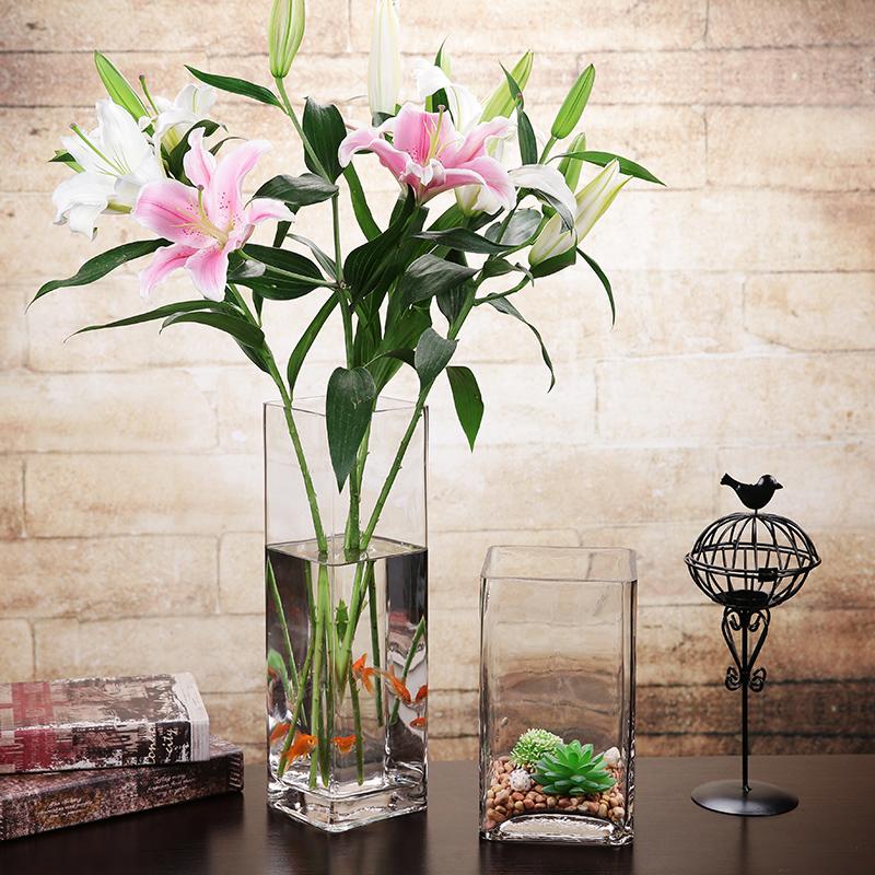 客厅放什么植物好看     客厅放植物的要点