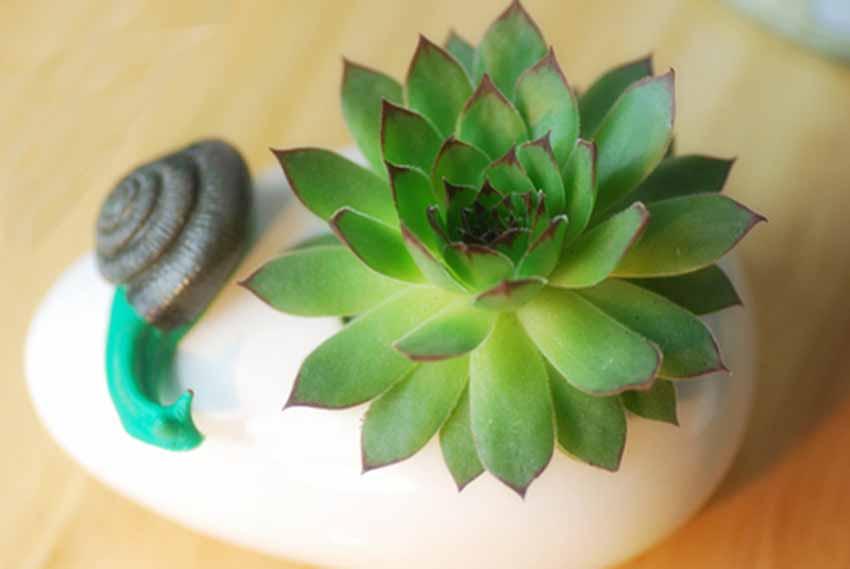 办公室盆栽植物