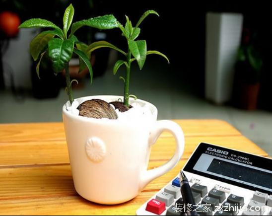 哪些植物不适合摆放在办公桌上