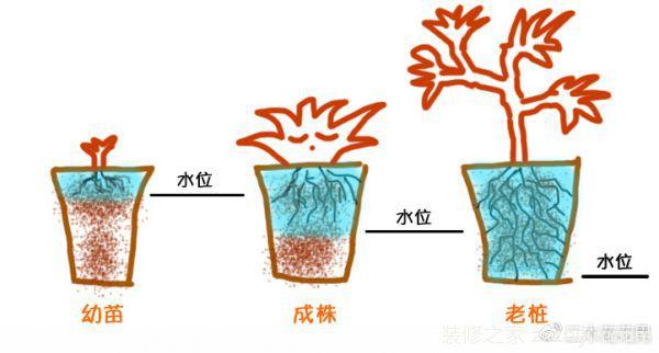 多肉植物如何浇水,多肉植物的养殖