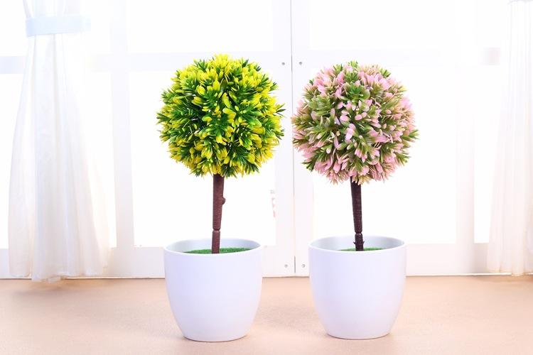 在办公桌养什么植物?有什么品种?